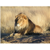 Weits Safaris February Online Auction