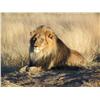 Wiets Safaris Online Auction - Session 1