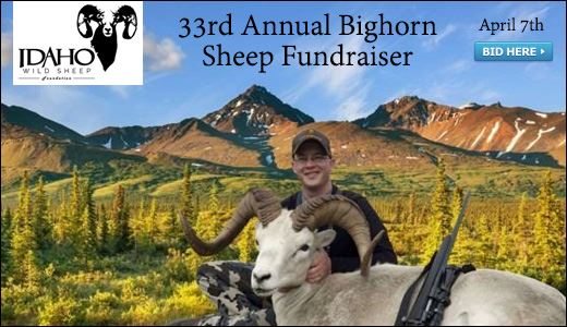 33rd Annual Bighorn Sheep Fundraiser