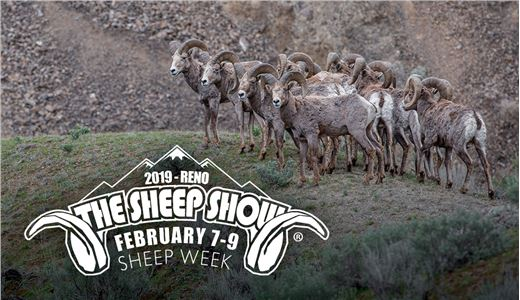 The Sheep Show 2019