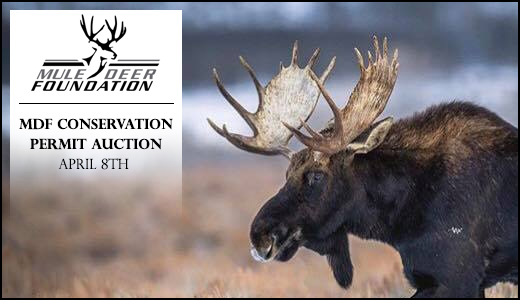 MDF Conservation Permit Auction