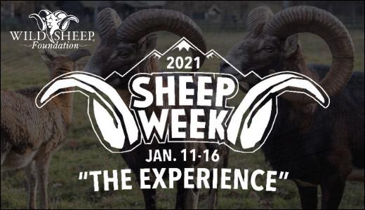 SHEEP WEEK 2021