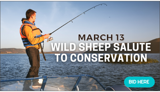 Wild Sheep Salute to Conservation