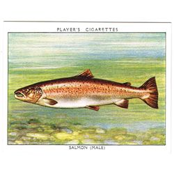 1935: Freshwater Fish series John Player and Sons cigarette cards