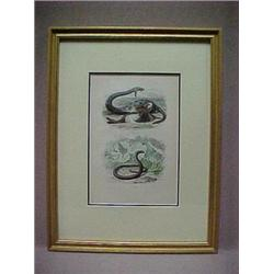 Framed French book plate, double image
