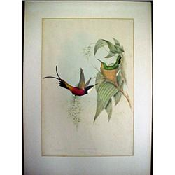 Framed lithograph of hummingbirds by John G