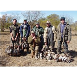 5-day Dove hunt for four hunters in Argentina