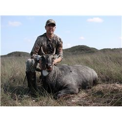 2-day Nilgai Antelope bull or cow hunt for two hunters and two non-hunters at the  King Ranch in Tex