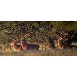 5-day red stag, European wild boar, and dove hunt for two hunters in Argentina - includes trophy fee