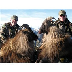 7-day bull Tahr hunt for one hunter and one non-hunter in New Zealand - includes trophy fees