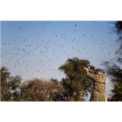 3-day high volume dove hunt for four hunters in Cordoba, Argentina