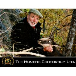 3-day Carpathian Chamois hunt for one hunter in Romania - includes trophy fees  up to 105 CIC Points