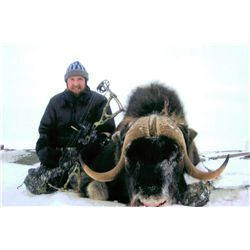 4-day Greenland Muskox hunt for one hunter in Cambridge Bay, British Columbia - includes trophy fees