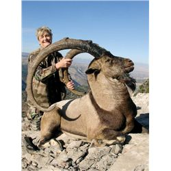 7-day Anatolian (Bezoar) Ibex for one hunter in Turkey - includes trophy fee