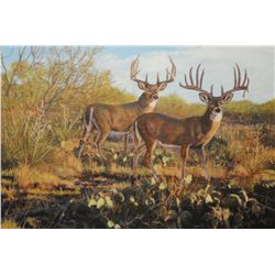 """Texas Trophy II - Whitetail"" - Original Oil Painting"