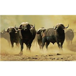"""Buffalo Herd"" by DSC Artist of the Year, Craig Bone"