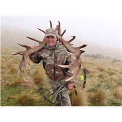 4-day red stag, tahr, chamois hunt for two hunters in New Zealand - includes trophy fees