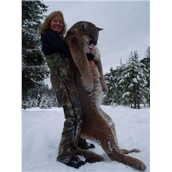 7-day mountain lion hunt for one hunter in Southern British Columbia