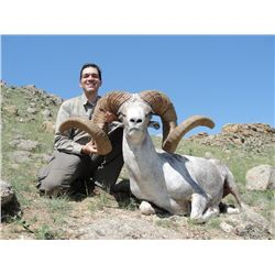 7-day Gobi Ibex hunt for two hunters in Mongolia - includes trophy fees for two Ibex (one each hunte