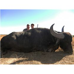 7-day big game hunt for two hunters  in Argentina - includes trophy fees