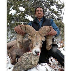 Taos Pueblo Rocky Mountain Bighorn Sheep