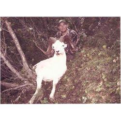10-Day Dall's Sheep Hunt & Mark Bansner Rifle