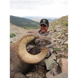 Colorado Bighorn Sheep Permit