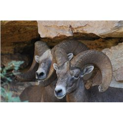 Texas Desert Bighorn Sheep Permit