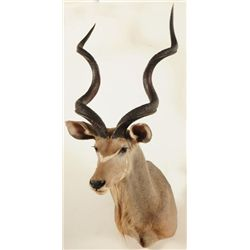 Kudu Bull Shoulder Mount