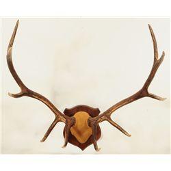 Elk Horn Mount