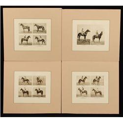 4 Vintage Horse Racing Photo Prints
