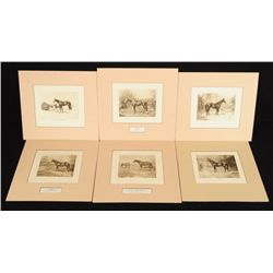 6 Martin Stainforth Race Horse Prints