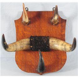 Old Horn Hat Rack