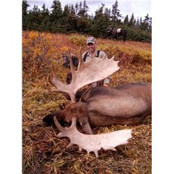 TROPHY MOOSE HUNT ~ LIARD RIVER ADVENTURES