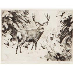 Rungius, Carl - Mule Deer