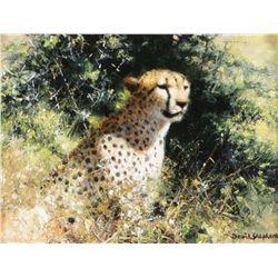 Shepherd, David - Cheetah