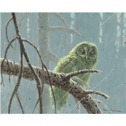 Bateman, Robert - Mossy Owl Spotted Branch