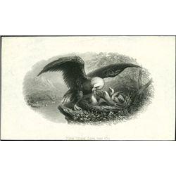 U.S. A Flock of Impressive Eagle Vignettes.