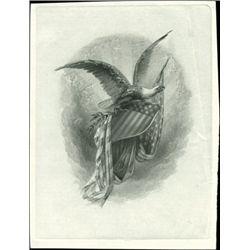 U.S. Large Impressive Eagles (7).