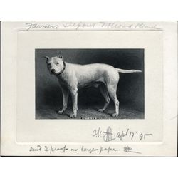 "U.S. ""Prince"" Vignette of Famous Dog."