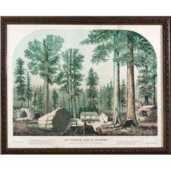 Mammoth Trees of Calaveras County CA - Calaveras County, -  - 2012aug - General Americana