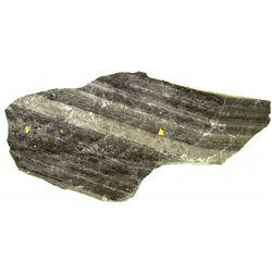 Chuckar Deposit Gold Specimen NV - Elko County,2012aug - Mineral Specimens