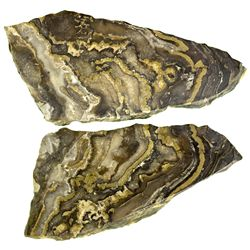 Banded Gold in Chert NV - Humboldt County,2012aug - Mineral Specimens