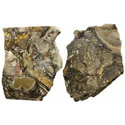 Electrum in Quartz-Adularia Veins NV - Humboldt County,c2000 - 2012aug - Mineral Specimens