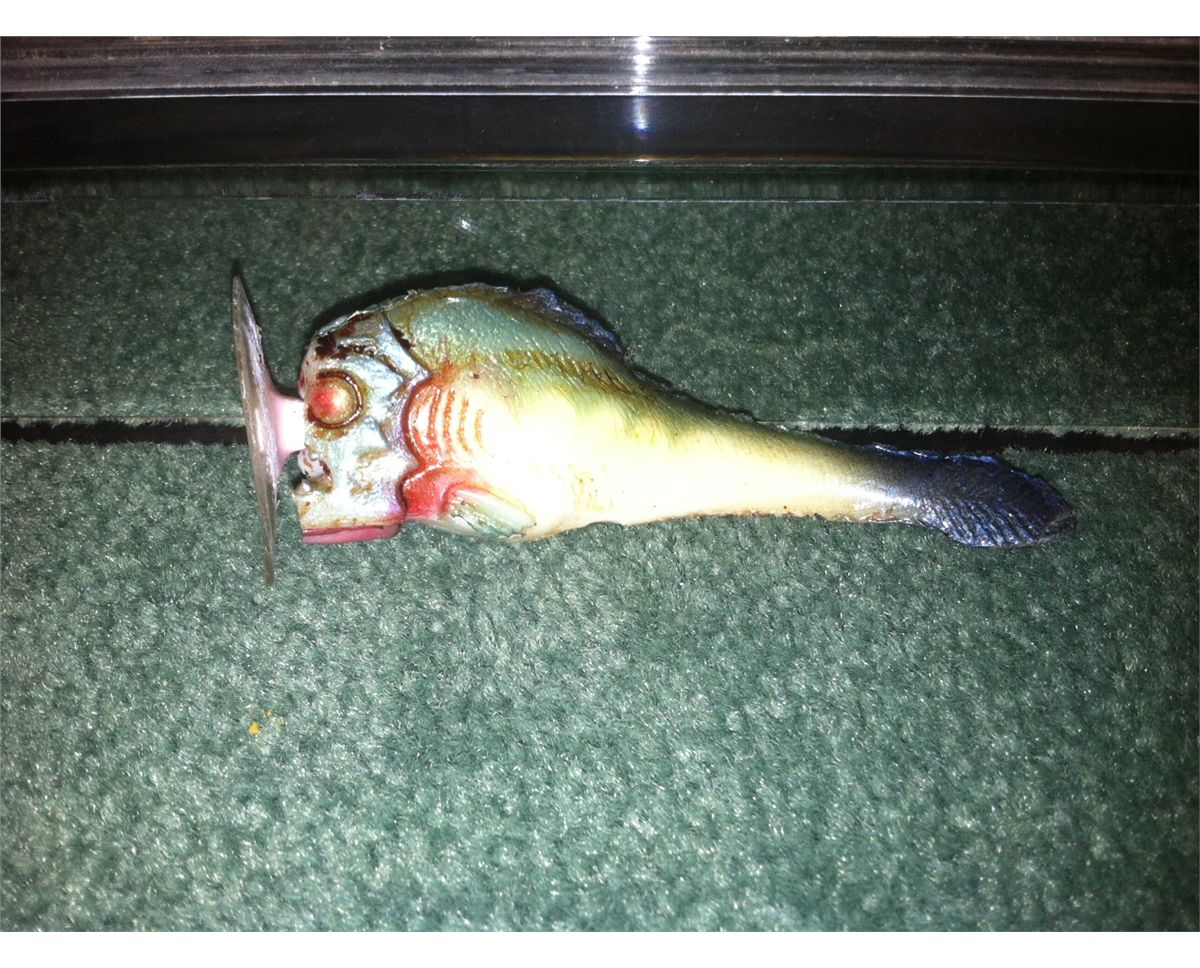 PIRANHA 3DD BABY FISH SCREEN USED IN OPENING OF FILM
