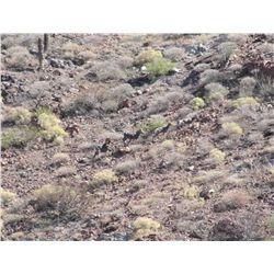 MULEGE BAJA SUR, MEXICO,  EL VIZCAINO BIOSPHERE RESERVE, DESERT BIGHORN SHEEP PERMIT