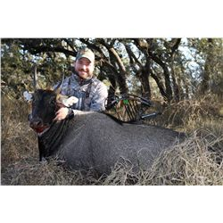 2-day Nilgai Antelope bull or cow hunt for two hunters and two non-hunters at the King Ranch in Texa