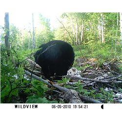 5-day black bear hunt and unlimited fishing for one hunter in Quebec