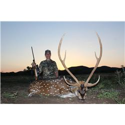 3-day trophy axis deer and trophy boar hunt for one hunter and one non-hunter in Texas - includes tr