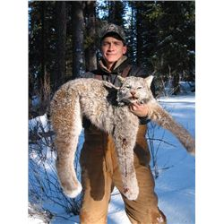 7-day Canadian lynx hunt for one hunter in Southern British Columbia